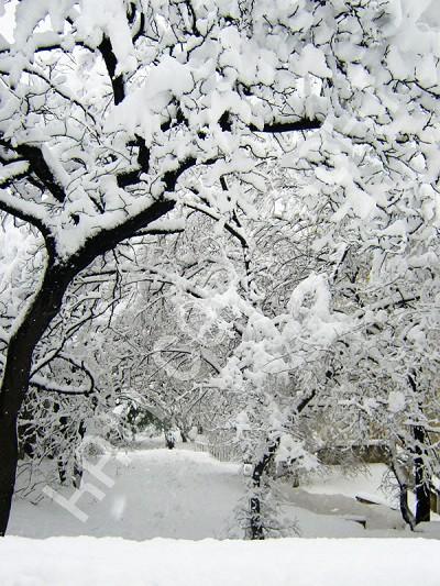Marc LEVY - Inédits - Une Boule de neige